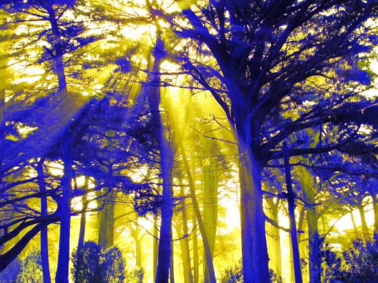 Blue trees, yellow light