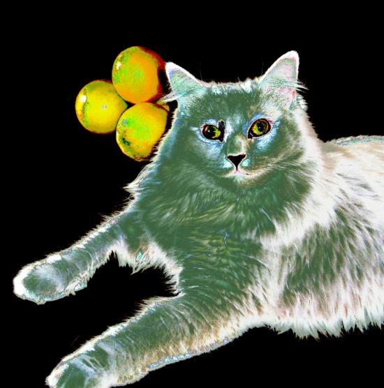 My cat and lemons