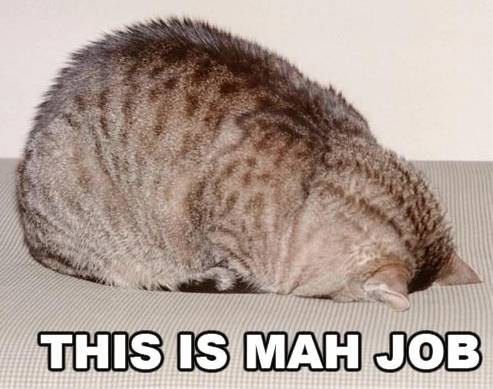lolcat_this_is_mah_job.jpg